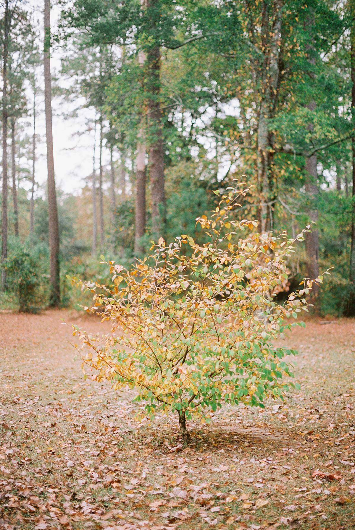 1909 charleston wavering place elopement wedding fall film southern styled 00039_web