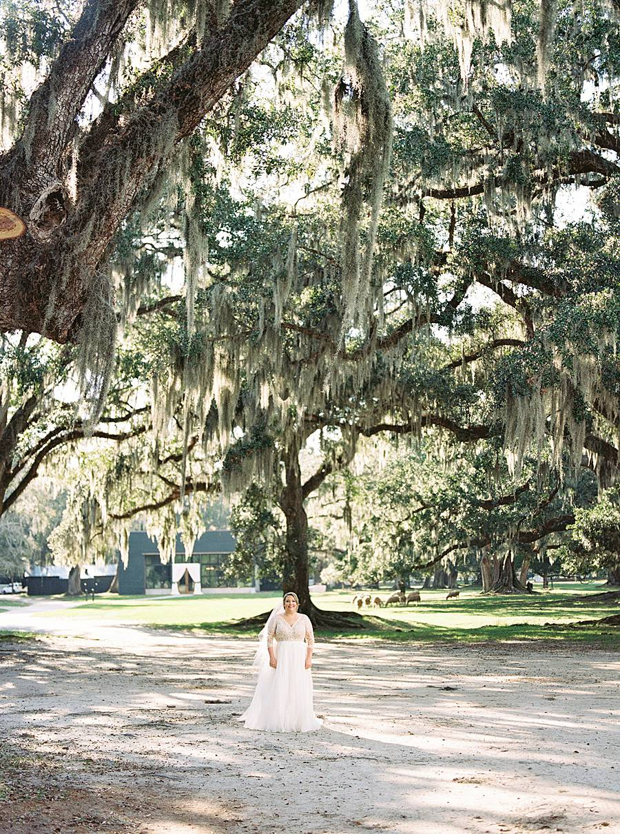 1810 middleton plantation charleston october wedding film 173_web_web