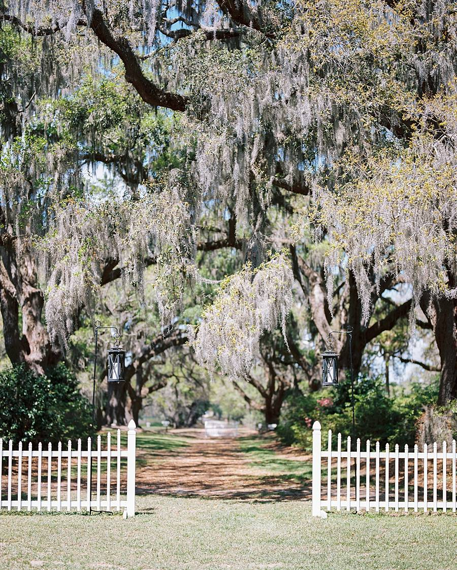 charleston cypress trees april wedding 1_web