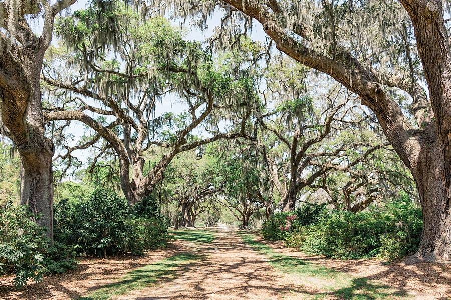 charleston cypress trees april wedding 30_web