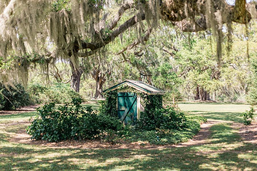 charleston cypress trees april wedding 32_web
