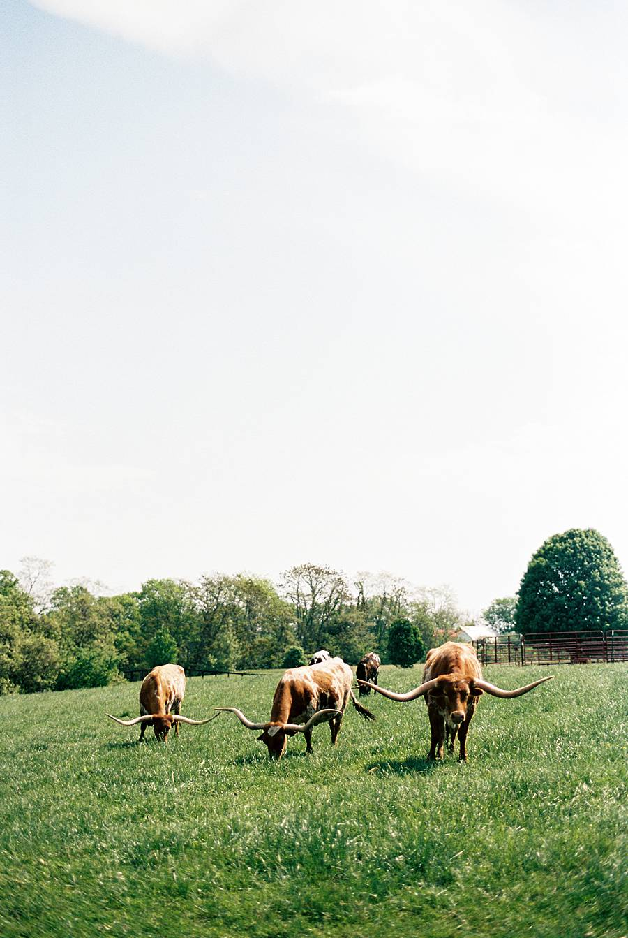 julia ryan kentucky farm wedding 71_web